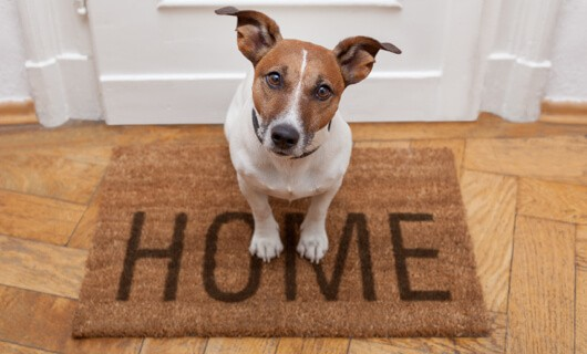 Pet on door mat | We'll Floor You